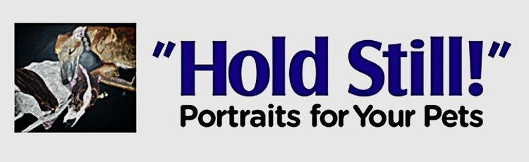 Hold Still Portraits for Your Pets